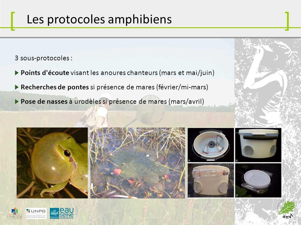 [ ] Les protocoles amphibiens 3 sous-protocoles :